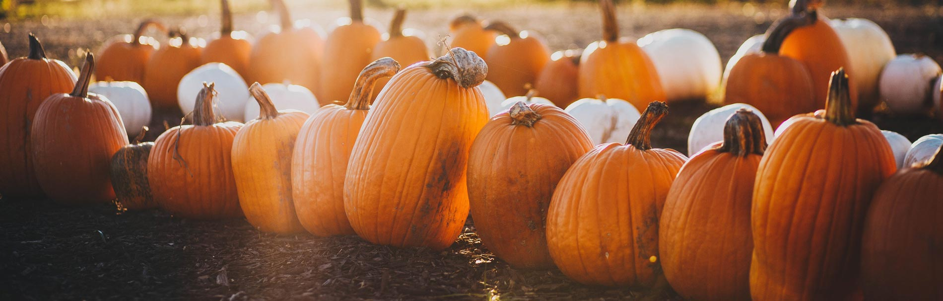 11 Things We Love About Fall - Winston-Salem Retirement